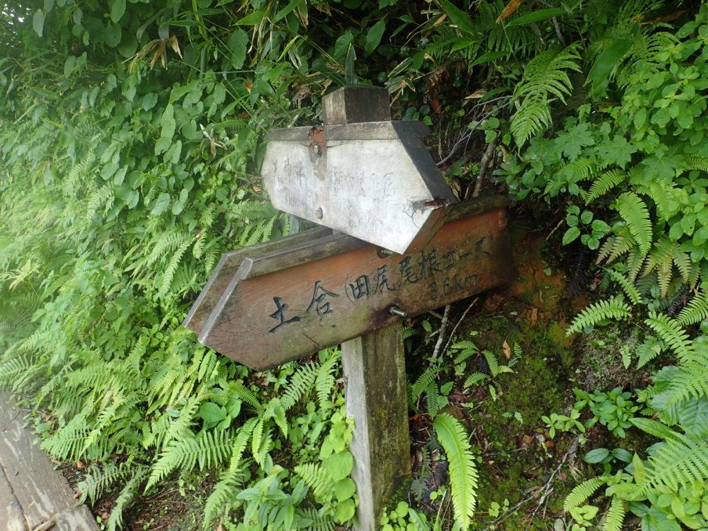 谷川岳の天神尾根から田尻尾根コースへの分岐
