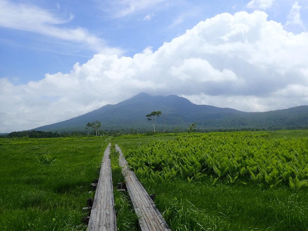 尾瀬の木道から見る燧ヶ岳