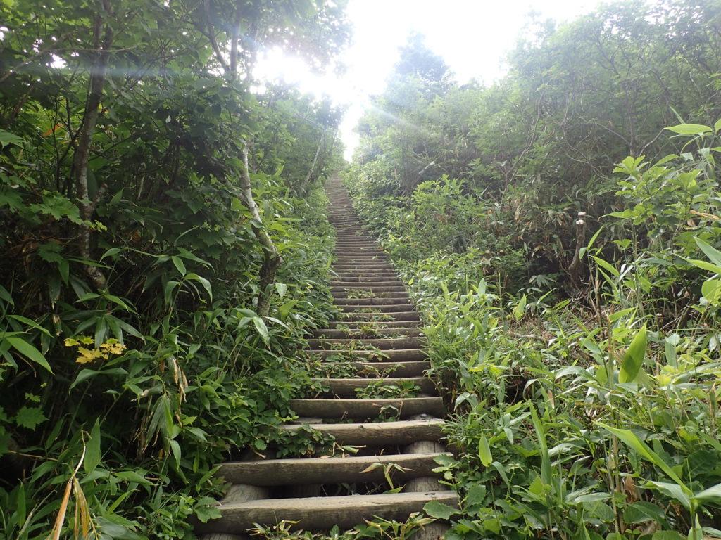 八甲田山の毛無岱の階段