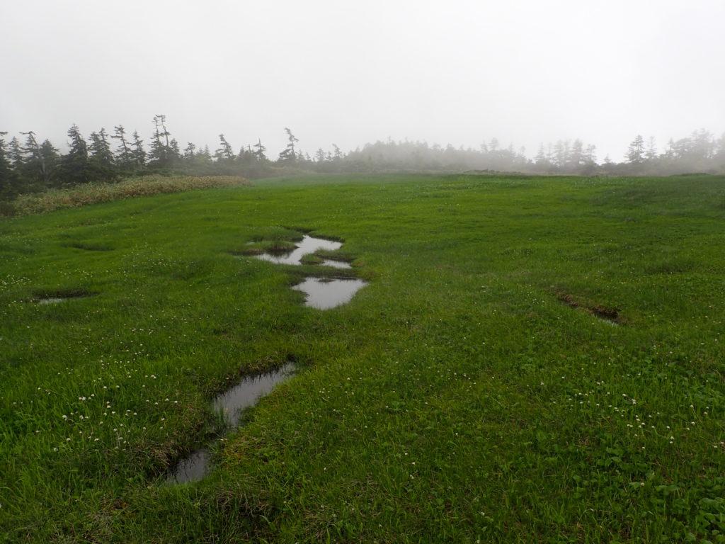至仏山の登山道の池塘
