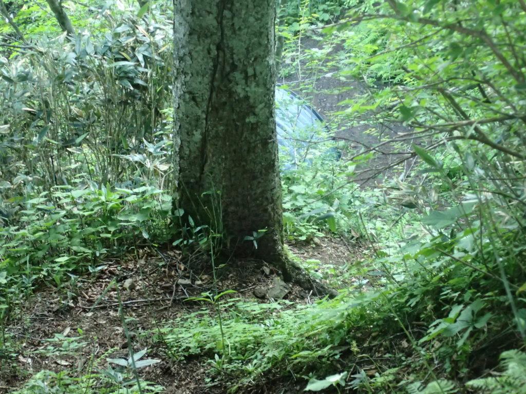 須原尾根から手小屋沢小屋の一部を撮影