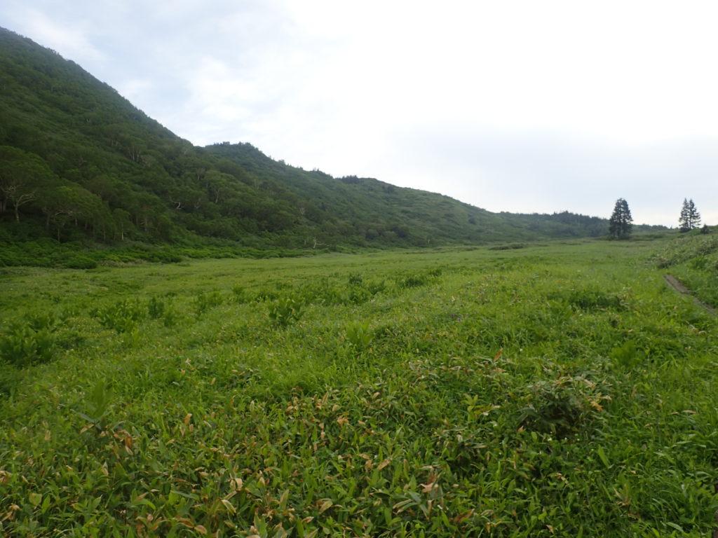 妙高山登山道にある高層湿原