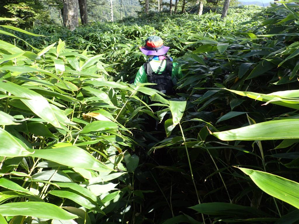 六林班峠付近の笹藪漕ぎ