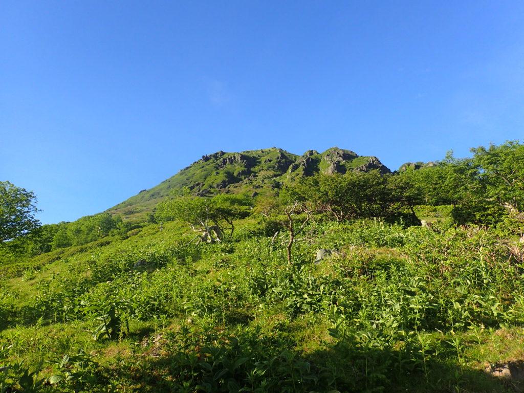 菅沼登山口ルートの登山道から見上げる日光白根山の山容