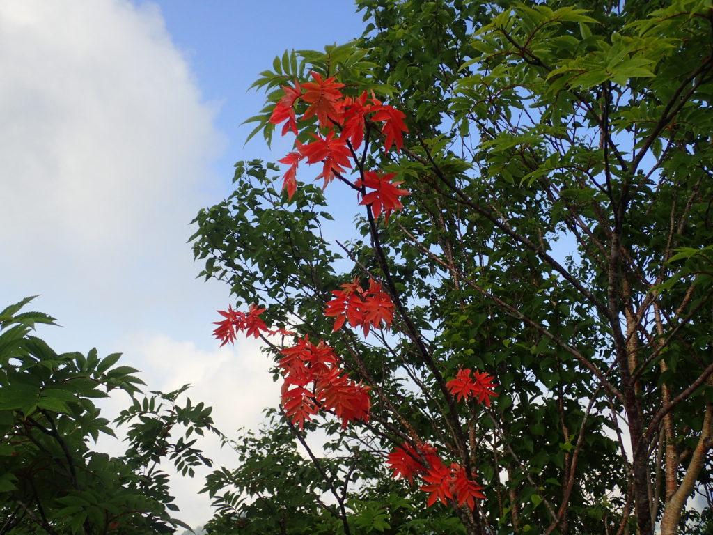 戸隠連峰の稜線の7月の紅葉