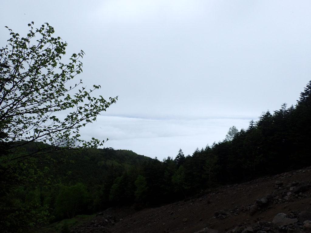 蓼科山女乃神茶屋ルート登山道から見る雲海