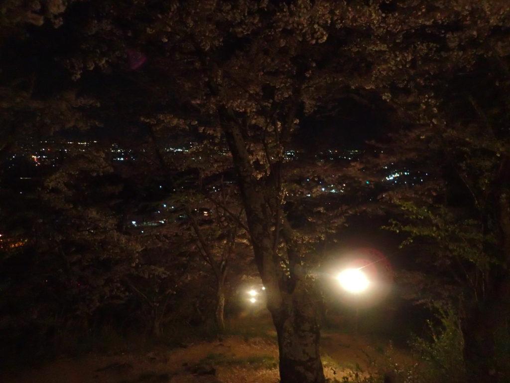 光城山での夜桜花見登山
