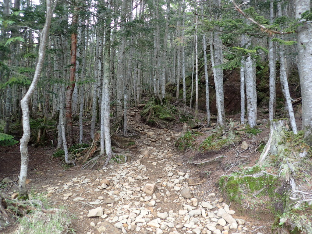 赤岳の地蔵尾根へと向かう登山道