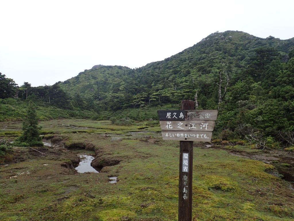 宮之浦岳の淀川登山口ルートにある花之江河(泥炭湿原)