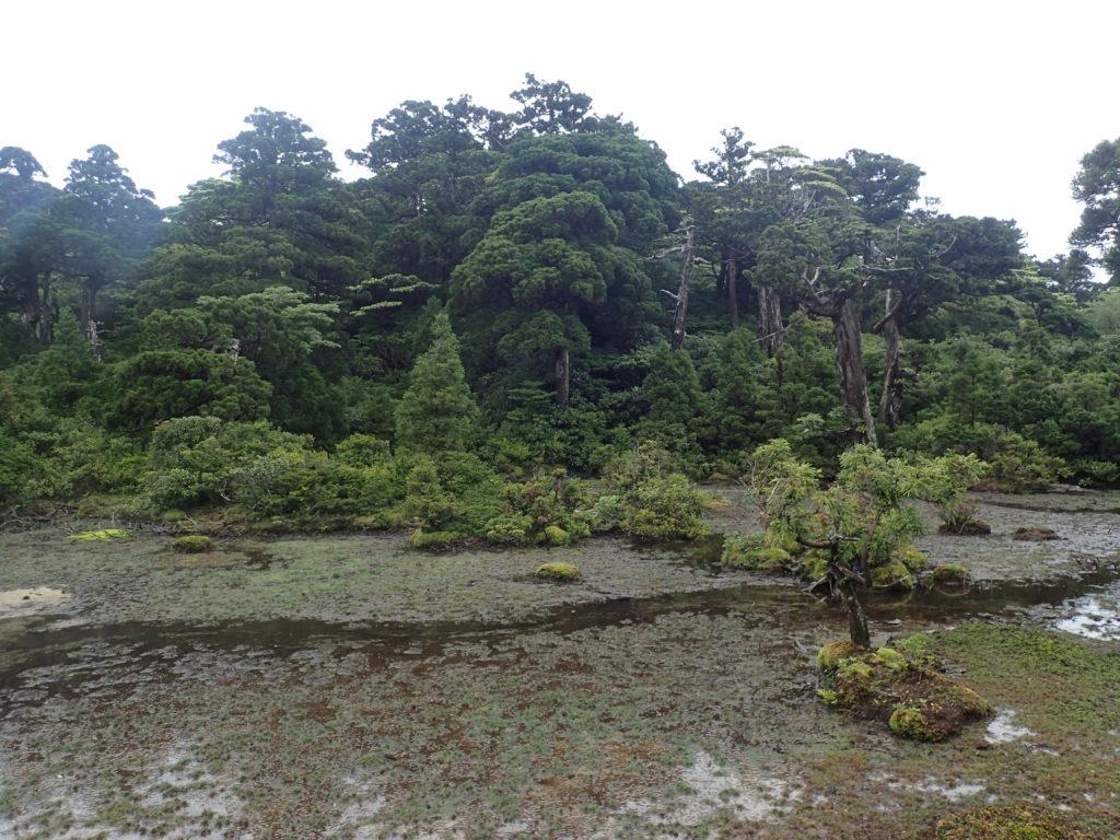 小花之江河を撮影