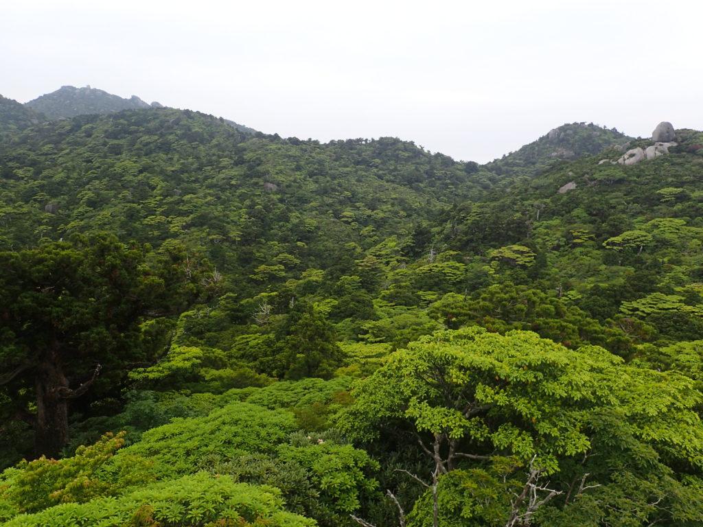 宮之浦岳の淀川登山口ルートの展望台からの眺め