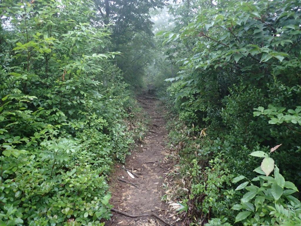 朝日岳の古寺鉱泉ルート登山道