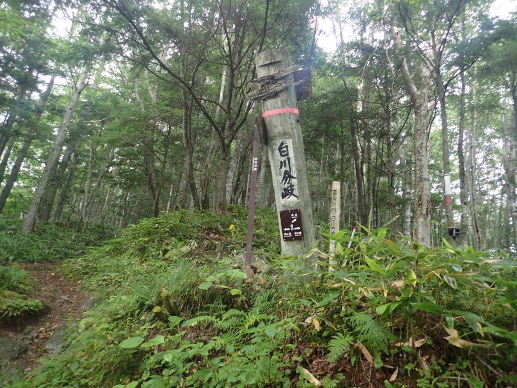 木曽駒ヶ岳の桂小場ルートの白川分岐