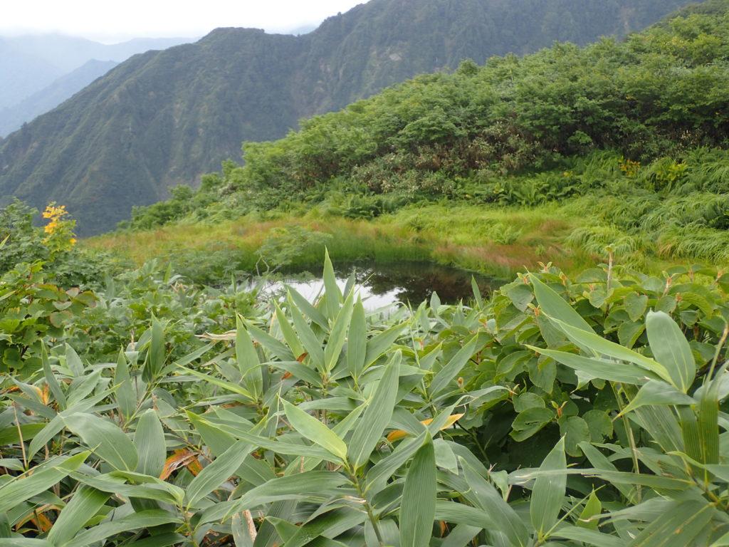越後駒ヶ岳の百草ノ池