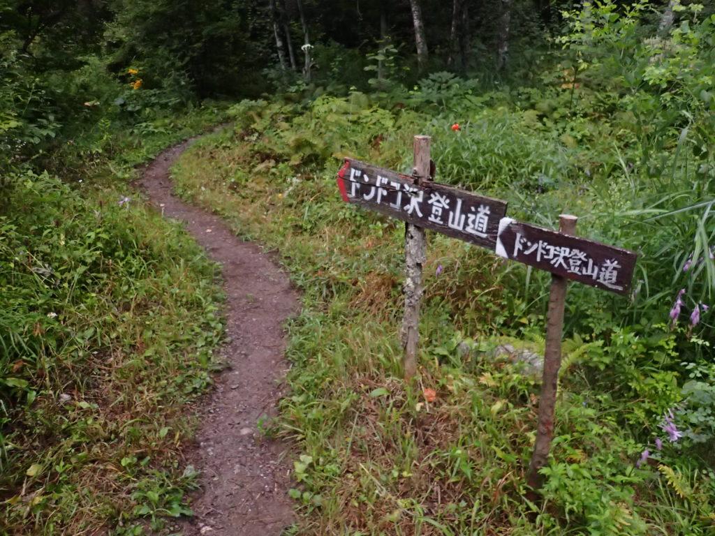 鳳凰三山のドンドコ沢登山道入口