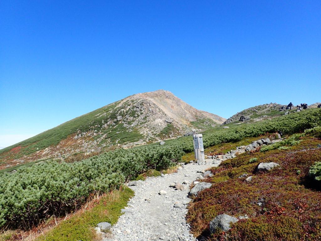 白山のお池めぐりコースから見上げる大汝峰