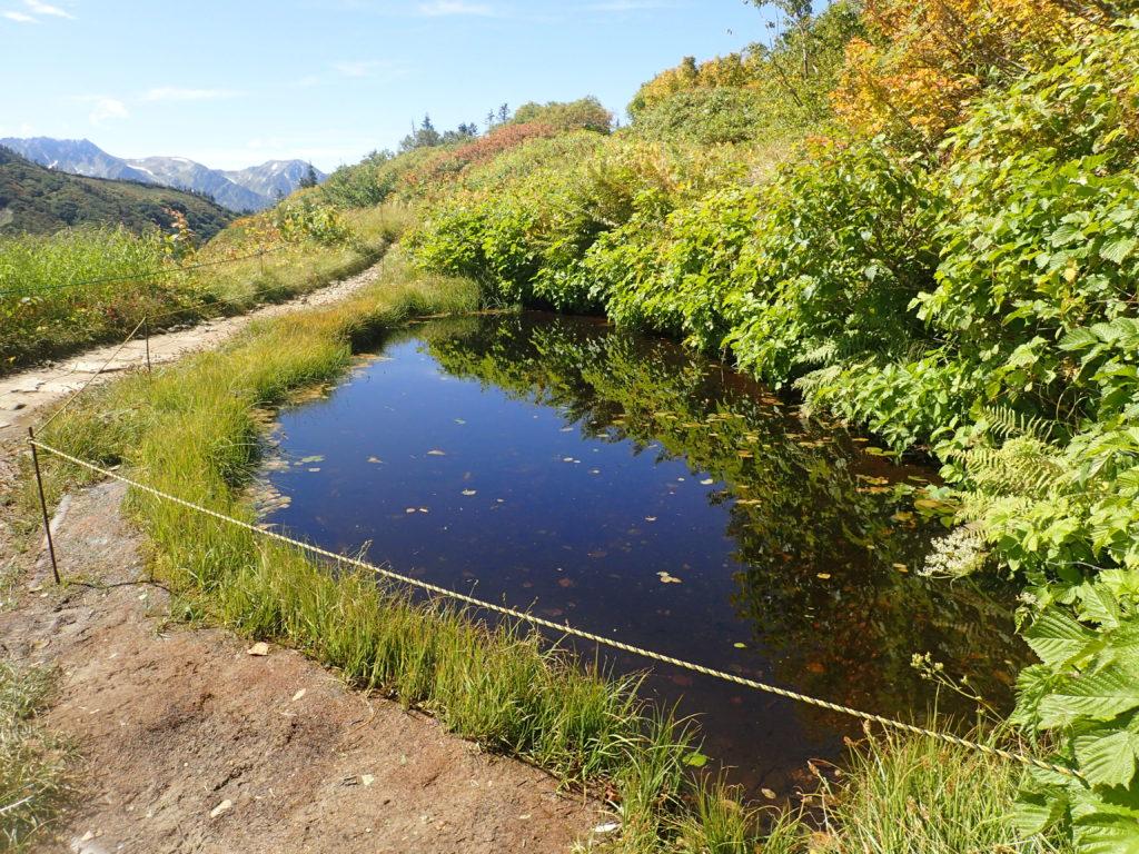 爺ヶ岳の種池