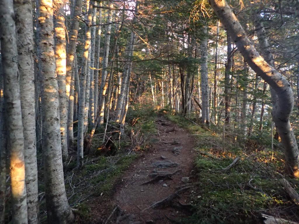 赤石岳の東尾根ルート登山道