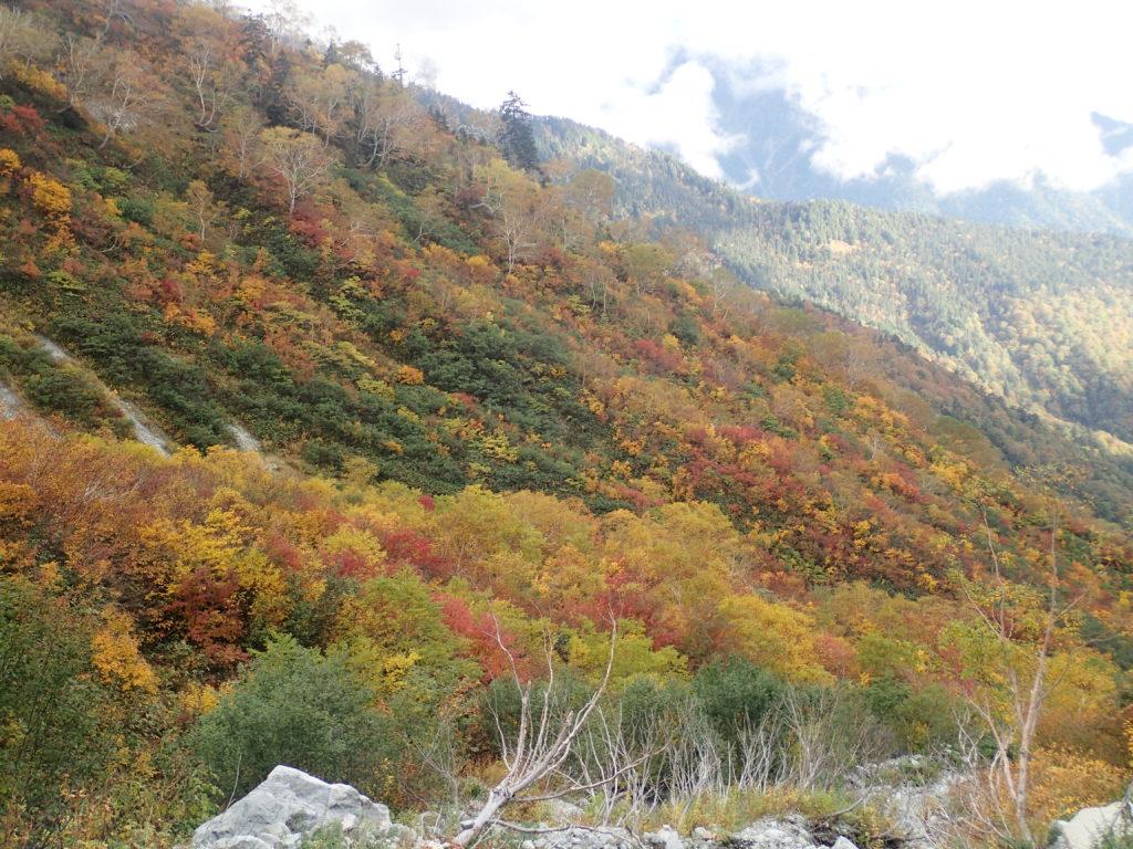 小池新道から見る紅葉
