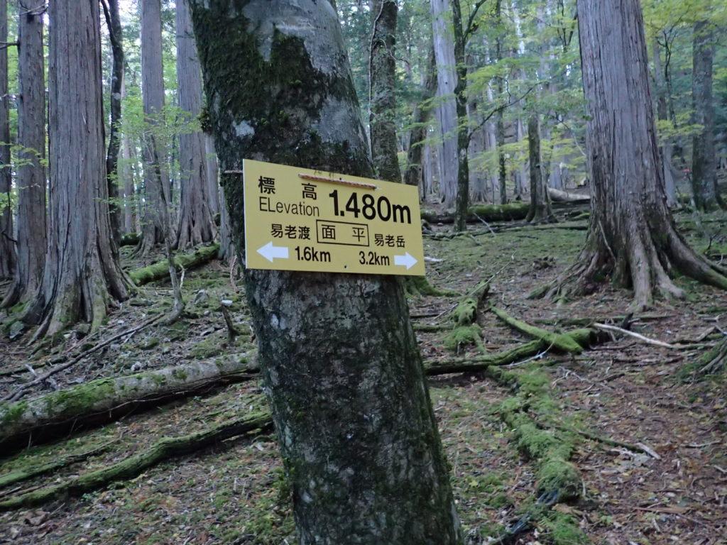 光岳の易老渡ルートの面平