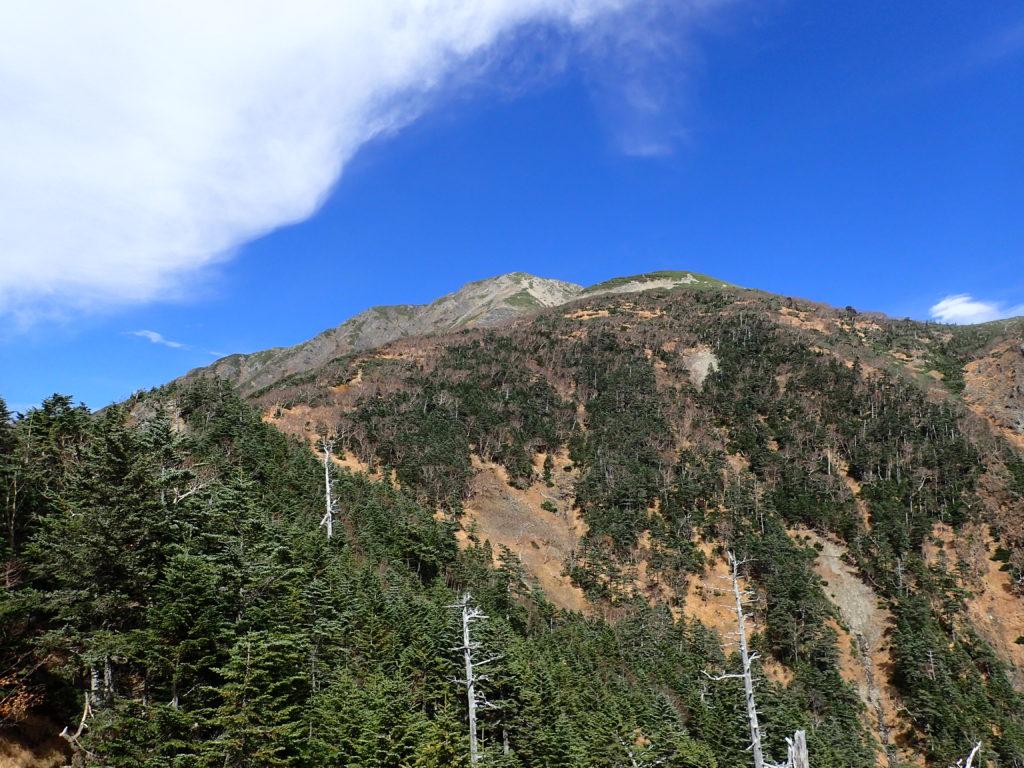聖岳の便ヶ島ルートの薊畑付近から見上げる聖岳山頂方向