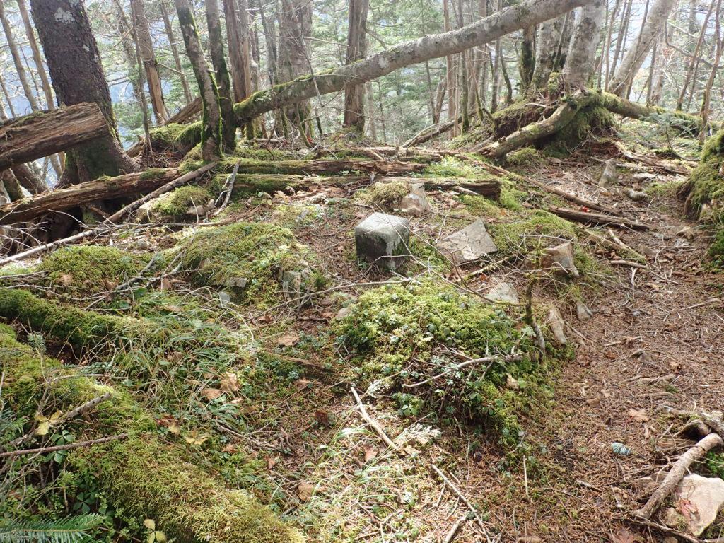 聖岳の便ヶ島ルート登山道の西沢三角点