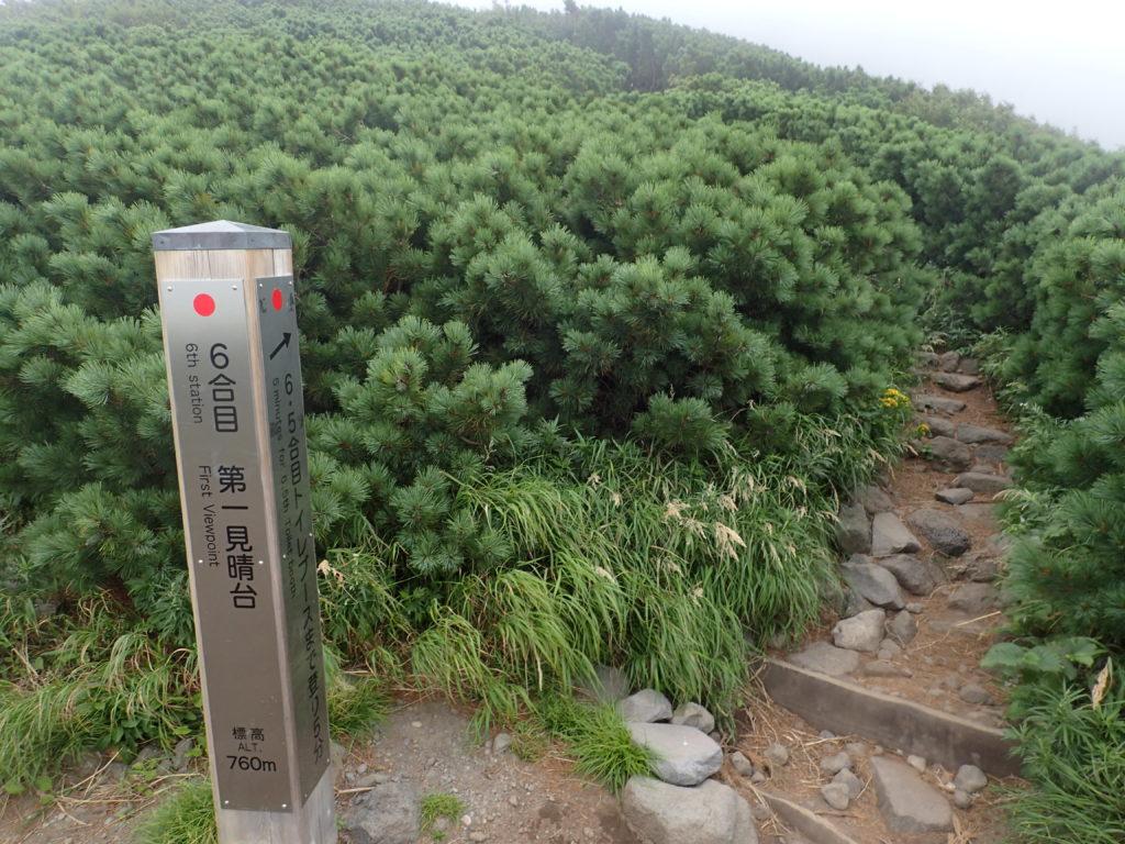 利尻山の鴛泊コース登山道の6合目第一見晴台