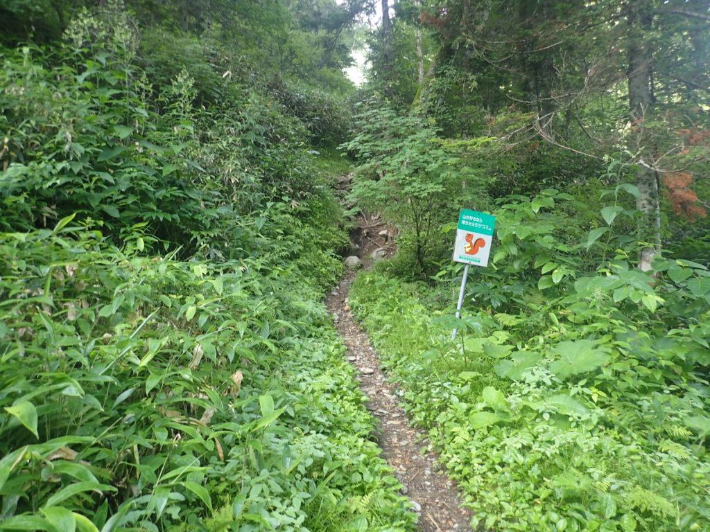 幌尻山荘から幌尻岳に向かう登山道