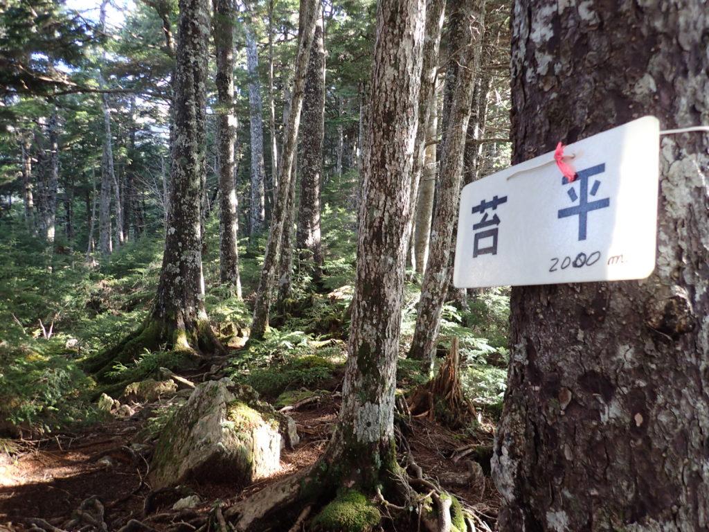 聖岳の便ヶ島ルートの苔平