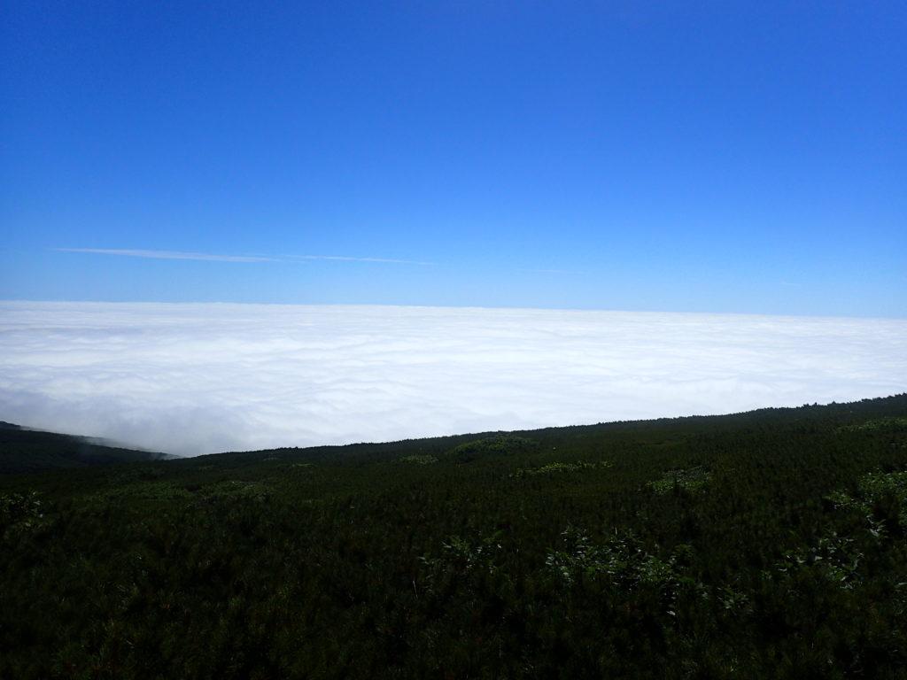 羅臼岳登山道から見た雲海