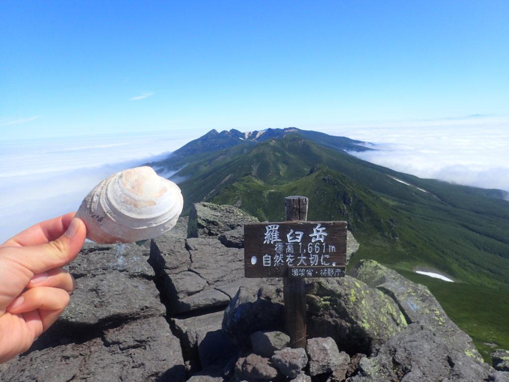 羅臼岳山頂に落ちていた貝殻