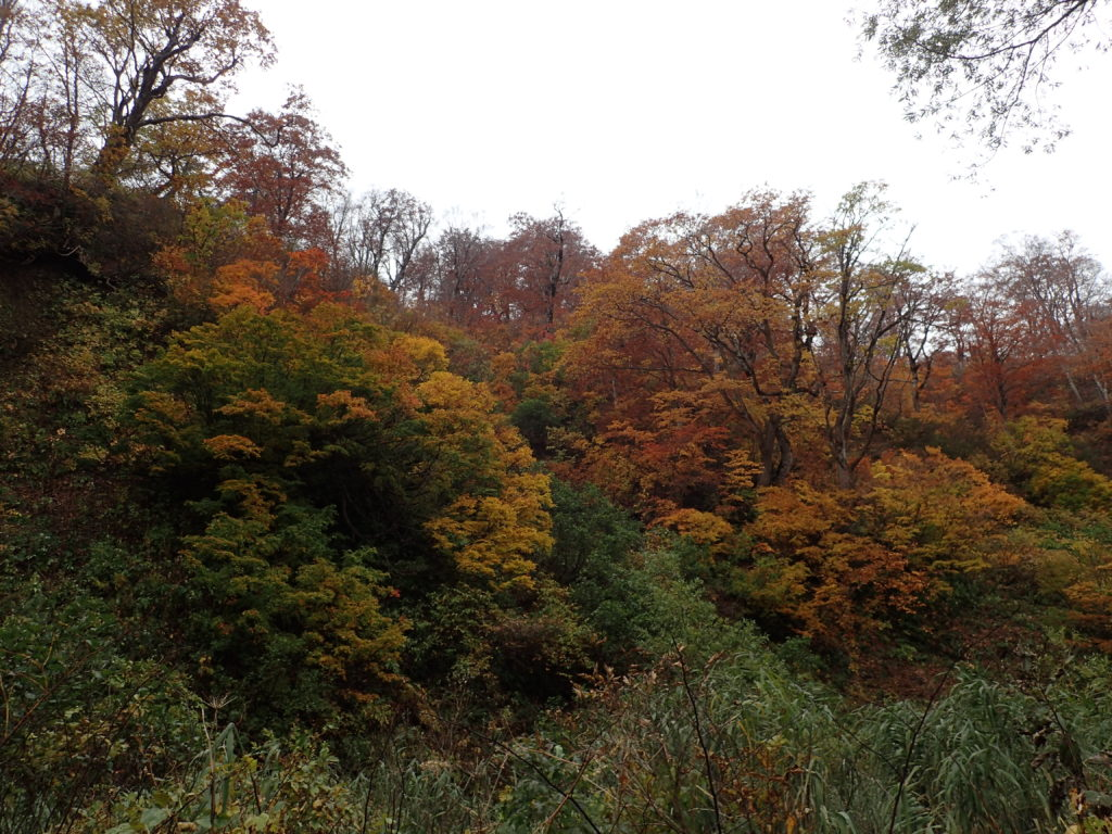 雨飾山登山道の紅葉