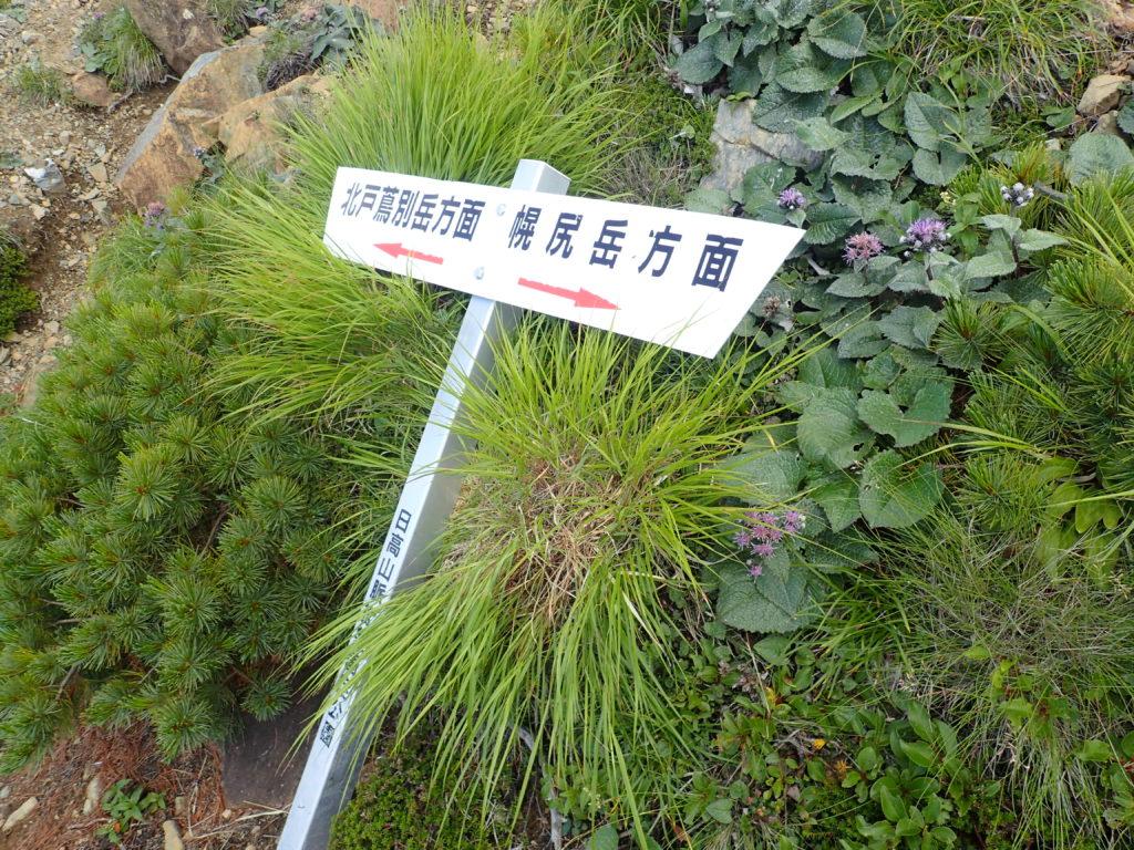 北戸蔦別岳方面と幌尻山荘との分岐地点