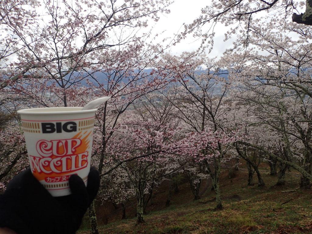 光城山での花見カップラーメン