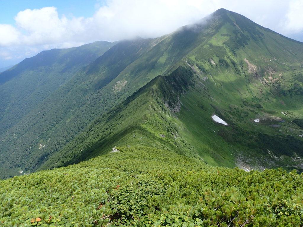 幌尻岳から戸蔦別岳へと続くハイマツに覆われた登山道