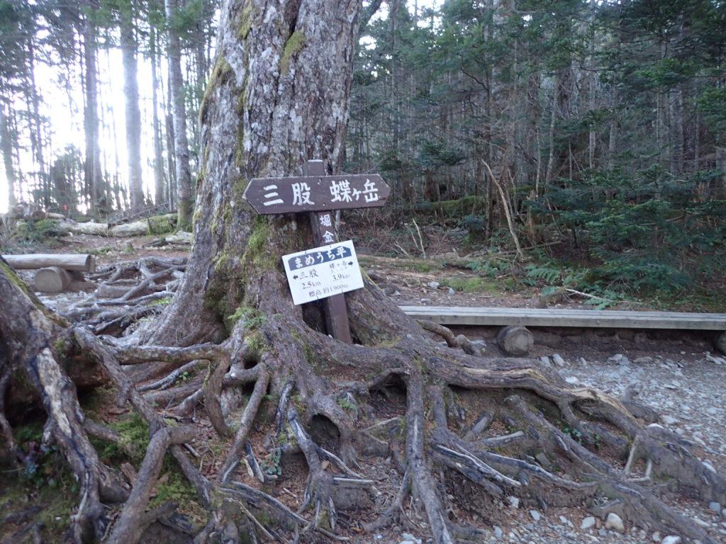 北アルプス蝶ヶ岳の三股ルートの休憩スポットであるまめうち平