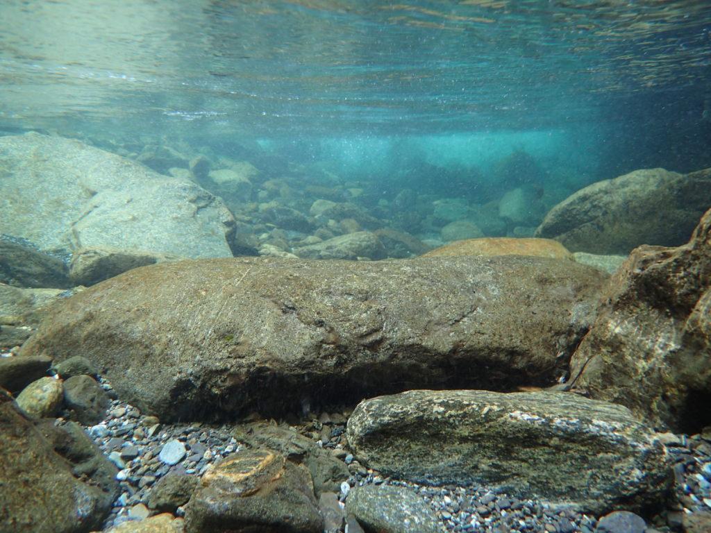 オリンパスの防水デジタルカメラであるTough(タフ)で水中を撮影した写真
